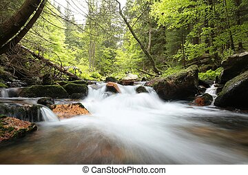 Forest stream flowing through the forest in the valley.