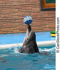 delfino, Palla