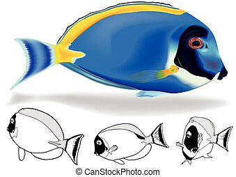 Powder Blue Tang Set - Powder Blue Tang (Acanthurus...