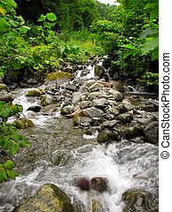 Forest stream - Beautiful forest stream on Caucasus...