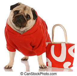 pug wearing red sweater standing beside fashionable red...
