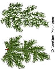 Vector isolated Pine branch with snow