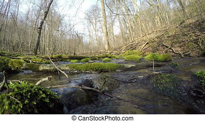 wild brook log moss