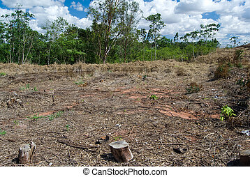 Deforestation - Replacement of native forest for eucalyptus...