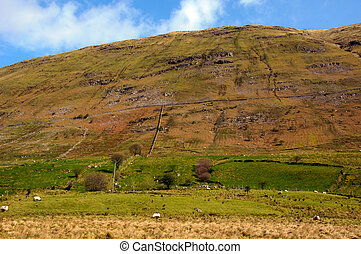 sheep on a mountain side in west ireland - photo of sheep on...