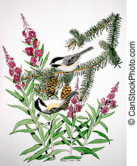 Black-capped Chickadees and Fireweed - Black-capped...