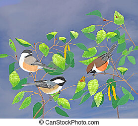 Chickadees with background - Black-capped and Boreal...