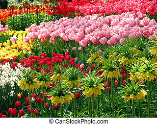 Blooming garden in spring with tulips, Netherlands