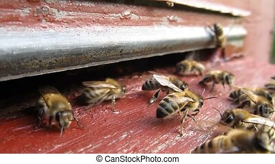 Active movement of bees - Bees are constantly flying for...