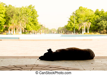 Dog sleeping in shade on hot summer day - Dog sleeping in...