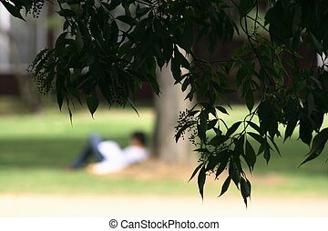 Man reading under a tree