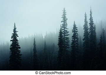 Pine trees in fog, at Hurricane Ridge, in Olympic National...