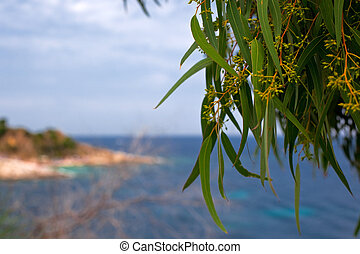 green willow leaves on a sea background small GRIP