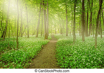Sunshine in the forest - Sunshine in the forest with path...