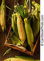 Raw Organic Yellow Seet Corn Ready to Cook