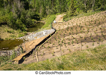 Erosion control on a slope with straw sock catch, silt...