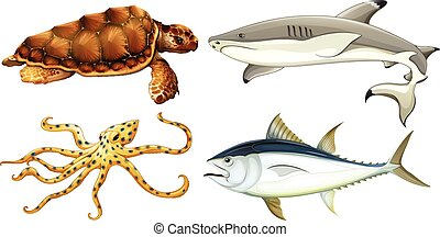 Different sea creatures on a white background