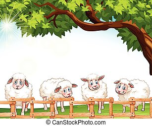 Four sheeps at the field