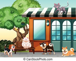 Domestic animals - Cute pets outside the house