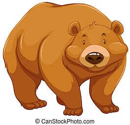 Big brown bear on a white background