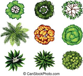 A group of plants - A topview of a group of plants on a...