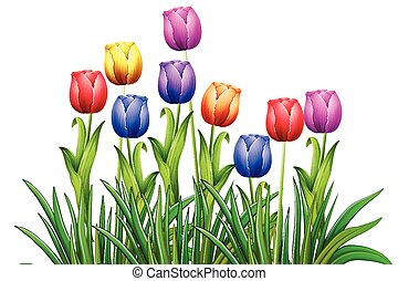 Tulips - Poster of colorful tulips illustration