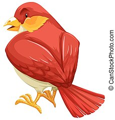 Red bird - Flashcard of a red feather bird