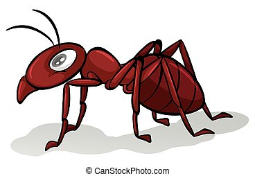Red ant - One red ant on a white background