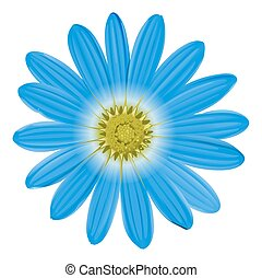 A blue flower on a white background
