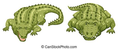 Crocodiles - Two green crocodiles on white background