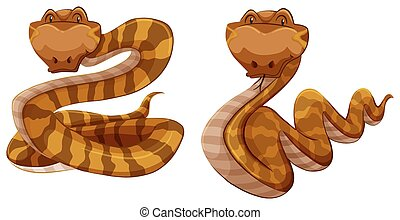 Snakes - Two brown snakes on white background