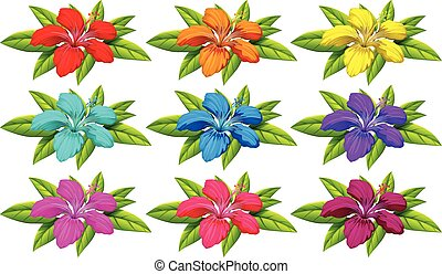 Colourful flowers - Set of colourful flowers on a white...