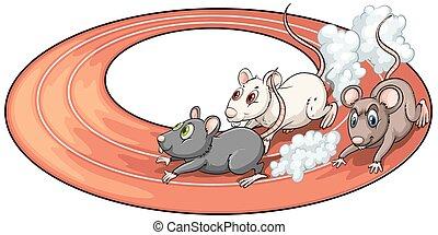 Three rats racing