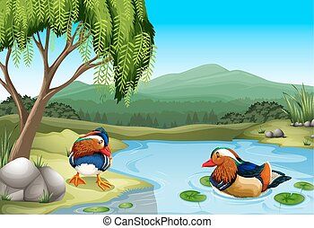 Scenery - Two colorful ducks in the nature