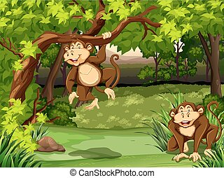 Monkeys - Two monkeys sitting in a jungle