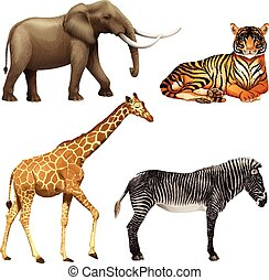 Four African animals - Four wild African animals on a white...