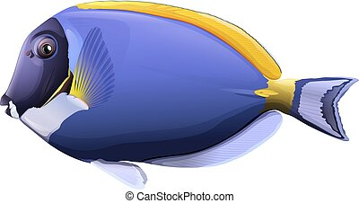 Fish - Flashcard of a powder blue tang fish