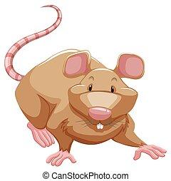 Playful rat