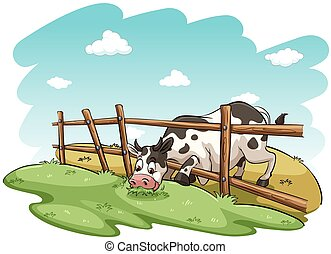 A cow at the field
