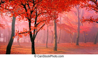 red maple leaves falling in wind - red maple leaves falling...