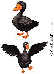 Goose - Black goose with diferent poses on white background