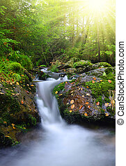 Creek in the national park Sumava - Czech Republic