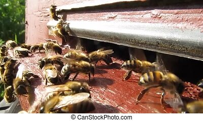 Ventilate the hive bees - Movement of bees wings produce a...