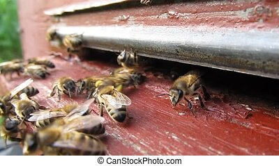 Active movement of bees near the en - Bees are constantly...