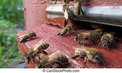Bees are constantly flying for nect - Bees fly continuously...
