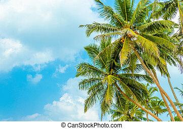 Sandy beach with coconut palm against  blue sky