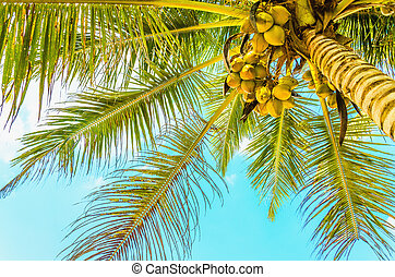 Sandy beach with coconut palm - Amazing sandy beach with...
