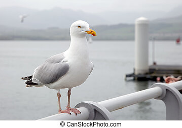Seagull perched on a pier handrail