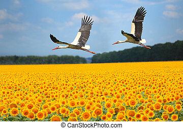 dos, storks, ,