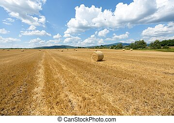 Hay bails on the field